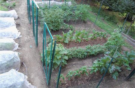 GardenMidJuly