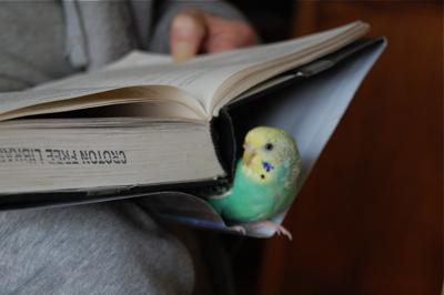 AddiBook