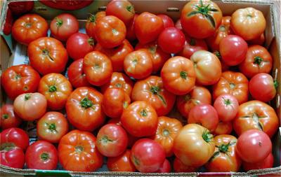 PreIrene_Tomatoes